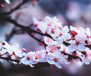 dEUS, amor, and flor image
