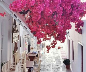 flowers, travel, and Greece image