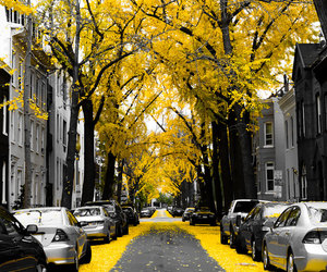 yellow, tree, and street image