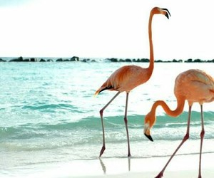 flamingo, beach, and sea image