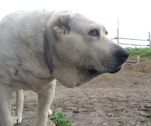 dog, doggy, and white image