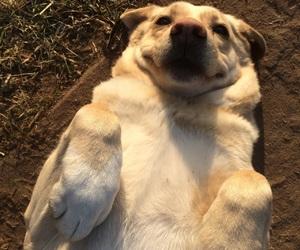dog, doggy, and fun image
