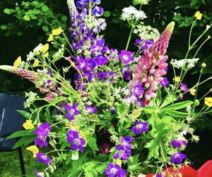 flowers, midsommar, and swedish midsummer image