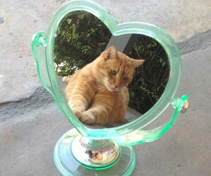 cat, mirror, and white image