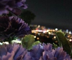 flowers, istanbul, and purple image