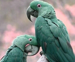 in love, mint, and parrots image