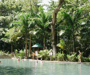 holiday, jungle, and palm trees image