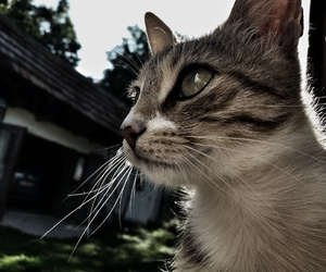 cat and dramatic image