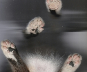 butt, paw, and cat image