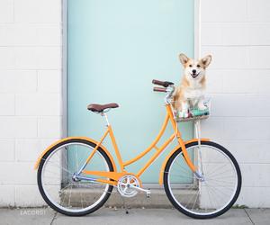 dog, animal, and bicycle image