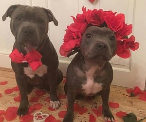 dog, cute, and couple image
