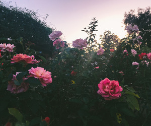 flowers, aesthetic, and garden image
