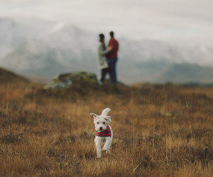 couple, dog, and nature image