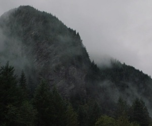cloudy, forest, and oregon image