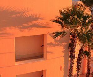 orange, aesthetic, and palm trees image