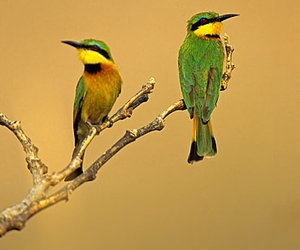birds and African birds image