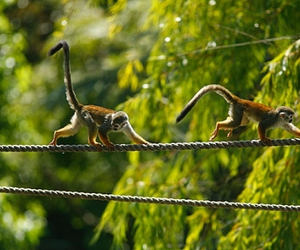 costa rica and monkeys image