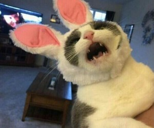 cat and bunny image