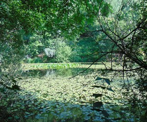 green, natura, and paesaggi image