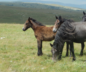 horse, mustang, and pferde image