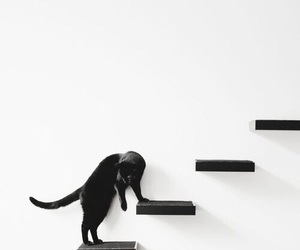 cat, black, and minimalism image