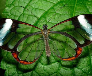 butterfly and transparent image