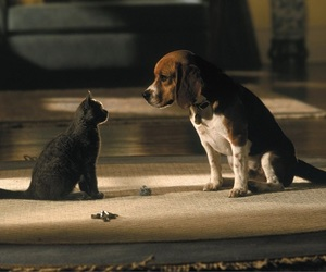 animals, photography, and cats image
