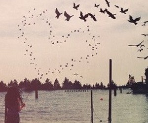 birds, sky, and ♡ image