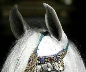 horse, arab, and white image