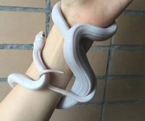 animal, photography, and snake image