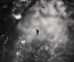 Image by Tahsin Abdulla