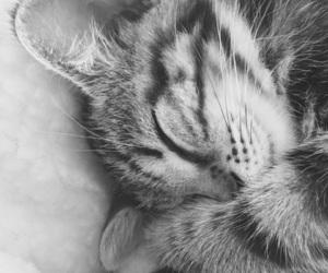 kitten, paws, and sleep image
