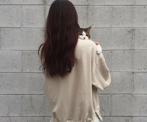 animal, asian, and cat image