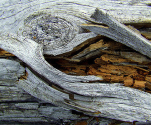 nature, tree trunk, and wood image