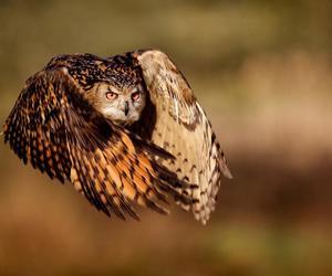 owl, animal, and fly image