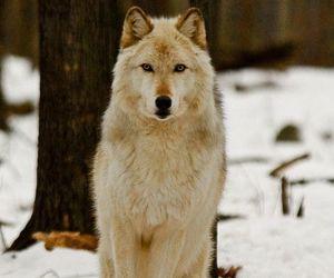 Výsledek obrázku pro wilki słodkie