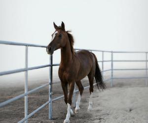 Animales, caballo, and beautiful image