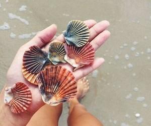 agua, beach, and bikini image