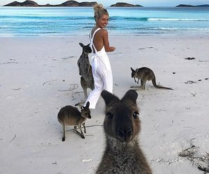 summer, beach, and kangaroo image