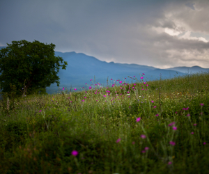 afternoon, meadow, and mountain image