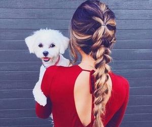dog, hair, and braid image