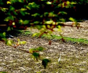 埼玉県, サキ, and 鳥 image