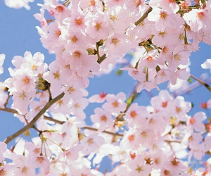 background, sun, and flowers image