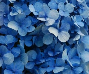 beautifull, flower, and blue image