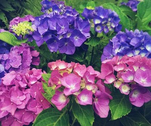 beautiful, summer, and colorful image