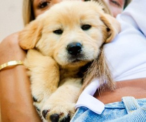 beautiful, cuple, and puppy image