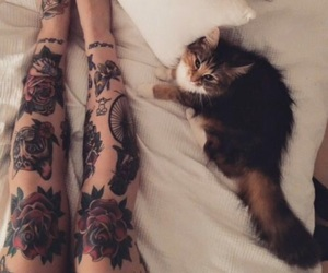 kitty, legs, and beauty image