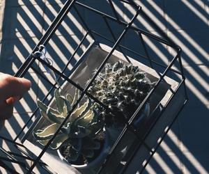 cactus, plantas, and planta image