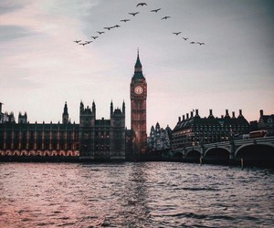 birds, city, and london image