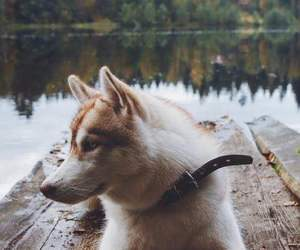 dog, animal, and lake image